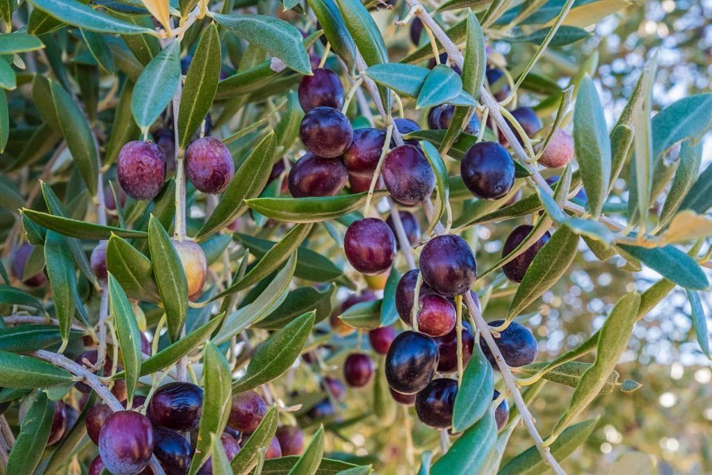 ¿Cómo hacer Jabón de Glicerina y Aceite de Oliva?